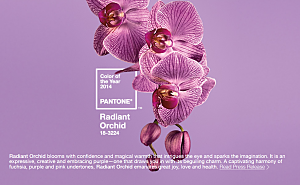 Pantone 2014 color of the year for Benefit auction decor