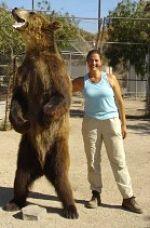 Sherry Truhlar, grizzly bear