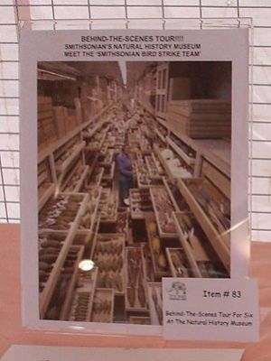 Benefit auction item - Smithsonian Lab Bird