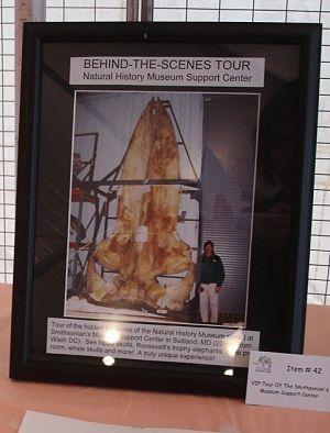 Benefit auction item - Smithsonian lab bones